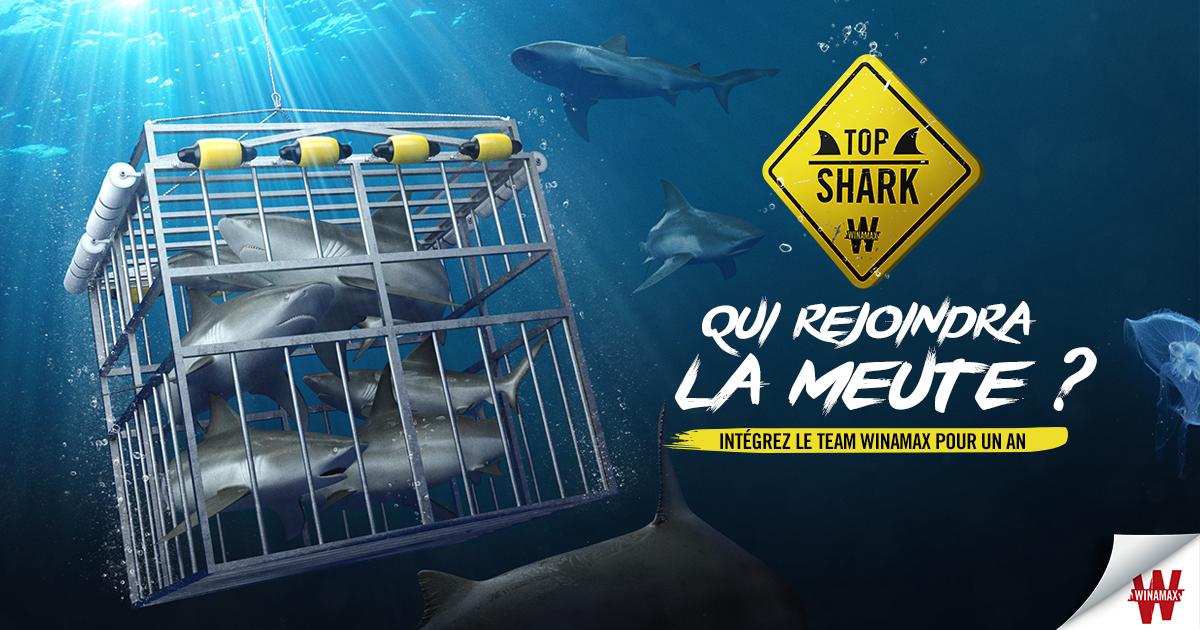 Top Shark, Semaine 2 : IllicoBusto fonce bille en tête